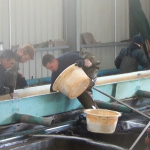 le tri des poissons est effectuer rapidement
