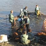 A l'aide de filets, l'équipe piscicole va extraire les poissons